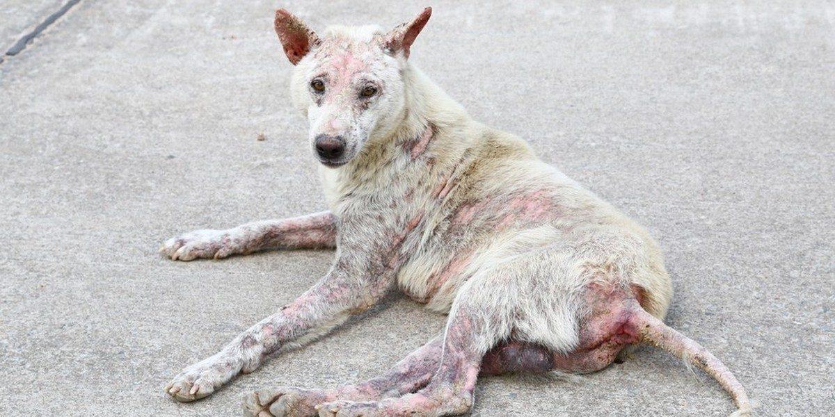 Le FBI considère désormais la maltraitance animale comme un crime