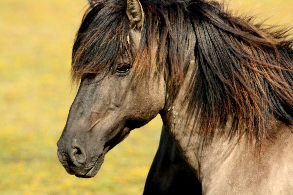 eveil tv - cheval