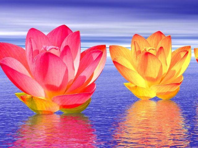 Faites ce test et découvrez  » Quel Chakra Domine Votre Vie?»
