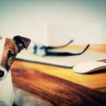 Conscience Animale, la nature bienveillante des chiens et des chats