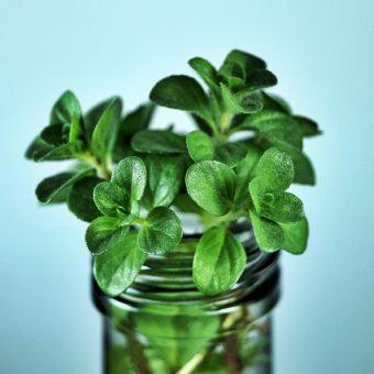 Voici 5 des plantes aromatiques à faire pousser chez soi