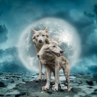Deux loups raconte qu'une bataille continue entre deux forces qui se produit en nous, La légende cherokee