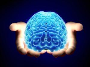 cerveau - eveil tv