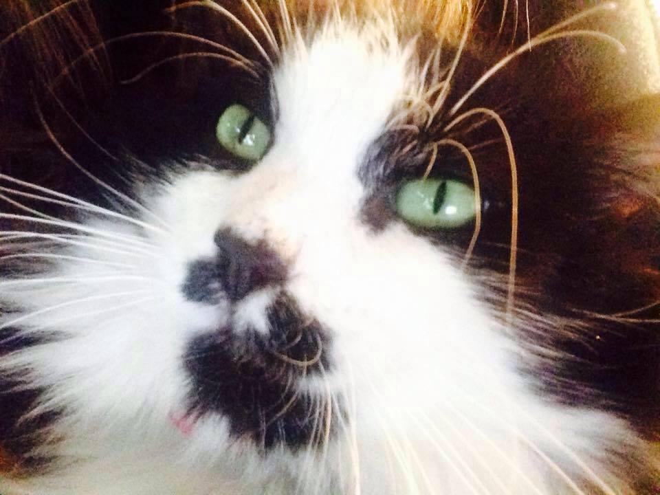 Saviez-vous que les chats ont une mission dans notre vie ?