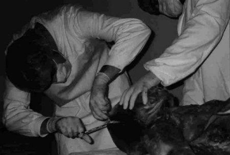Autopsie d'un extra terrestre dans un hôpital Yougoslave