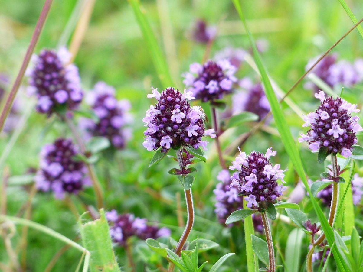 4 plantes accessibles à tous qui guérissent les maux