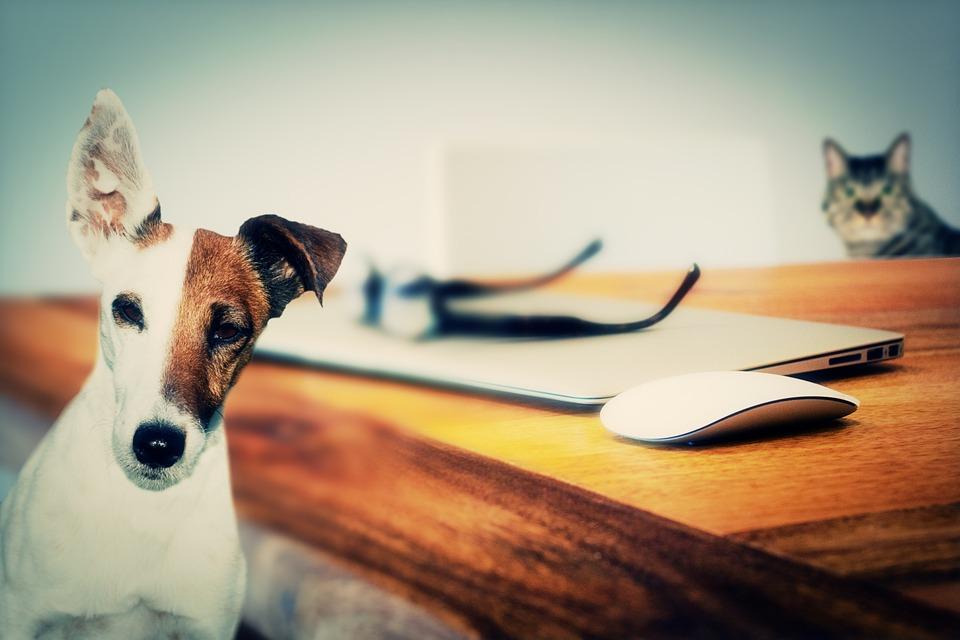eveil tv spiritualité des animaux