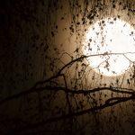 Lunaire ☾ Pleine Lune du 19 février ☽ en vierge