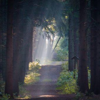 Le chemin vers la Lumière