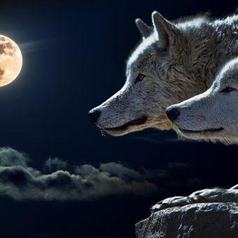 Calendrier des Lunes, méthode d'interprétation