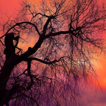 Purifier une pièce avec les énergies des arbres