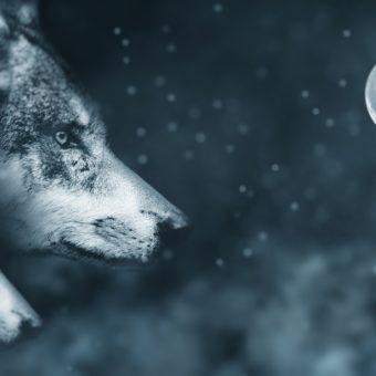 2018 : Les nouvelles énergies de la pleine Lune du 22 décembre