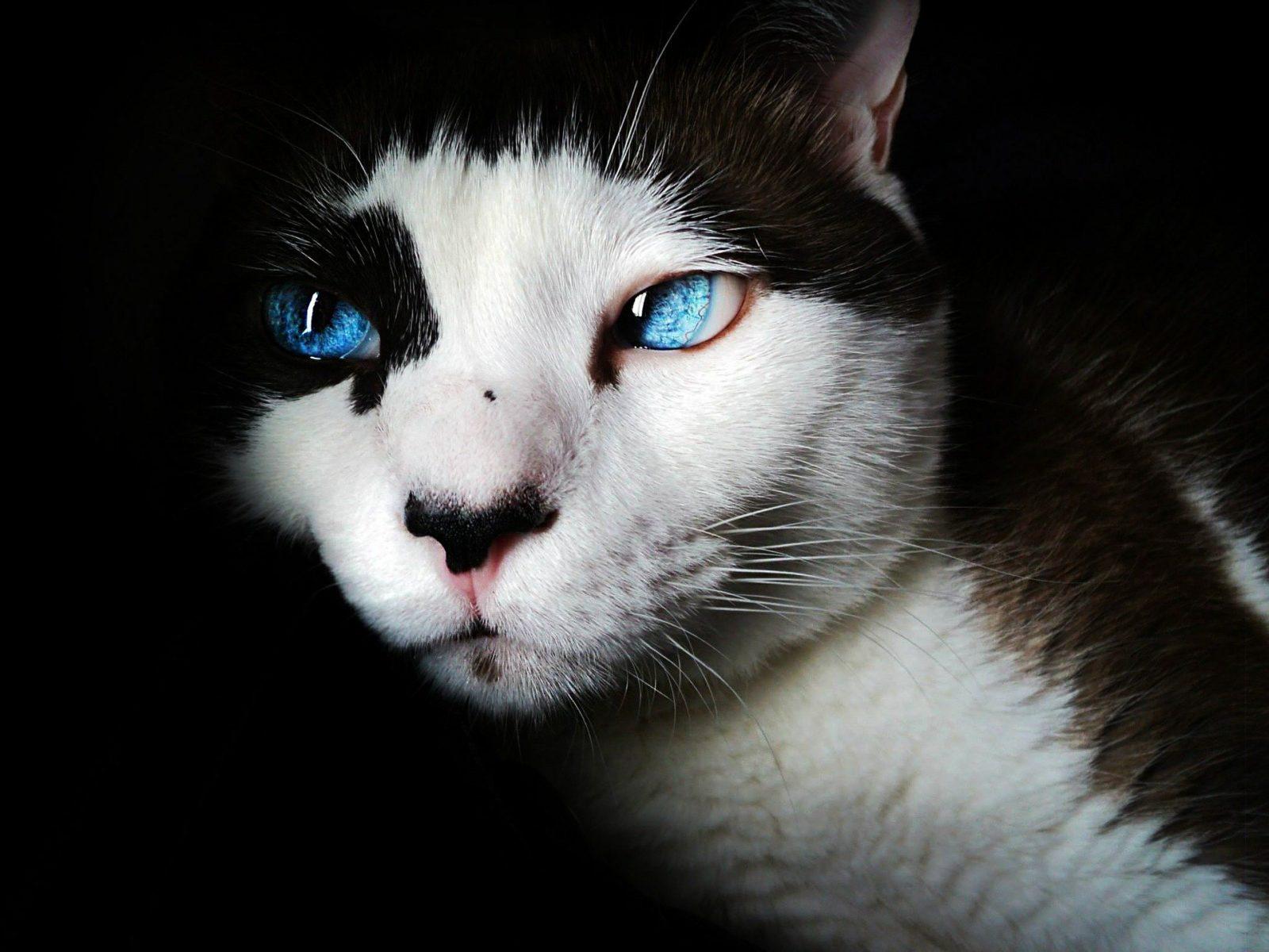 chats pouvoir